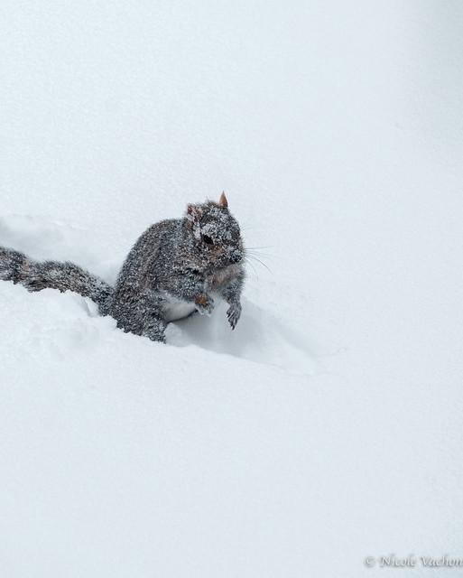 J'adore les tempêtes de neige!-3