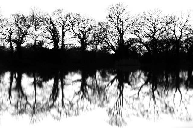 Eerie Reflections on the Lake in Black & White