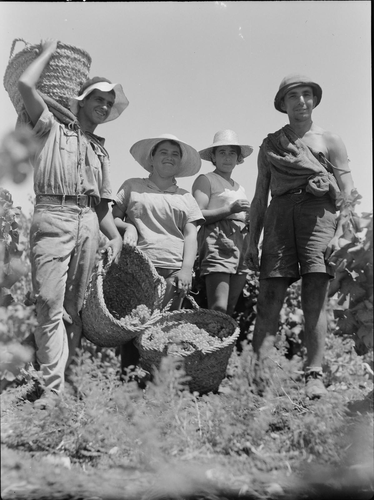 05. Сборщики винограда