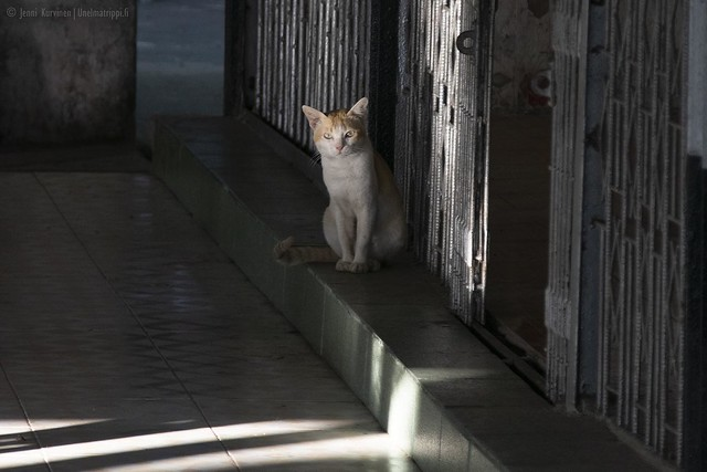 Kissa käytävällä matkalla Mandalay Hillille