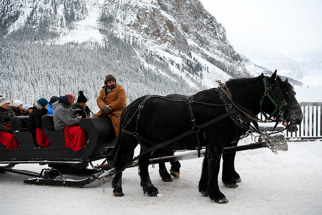 Ready for a Sleigh Ride Along the Lake