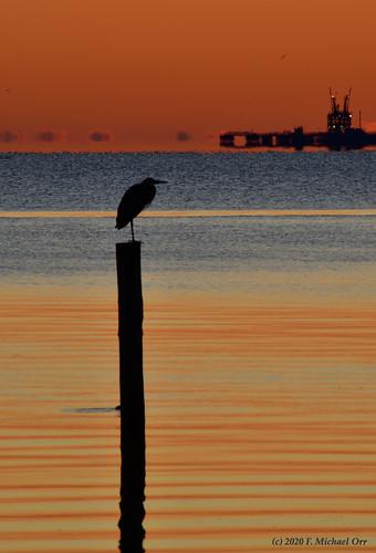 nikond7500 tamron18400f3563diiivchld virginia sunrise dawn bird