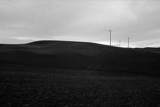 In a Field, Eastern Washington