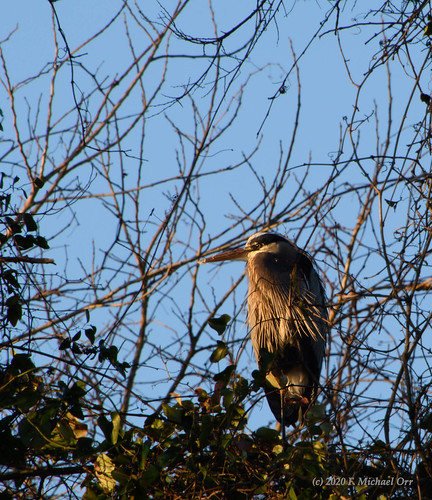 nikond7500 tamron18400f3563diiivchld virginia bird animal