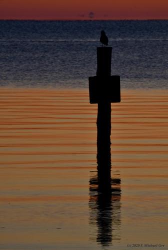 nikond7500 tamron18400f3563diiivchld virginia bird sunrise dawn river