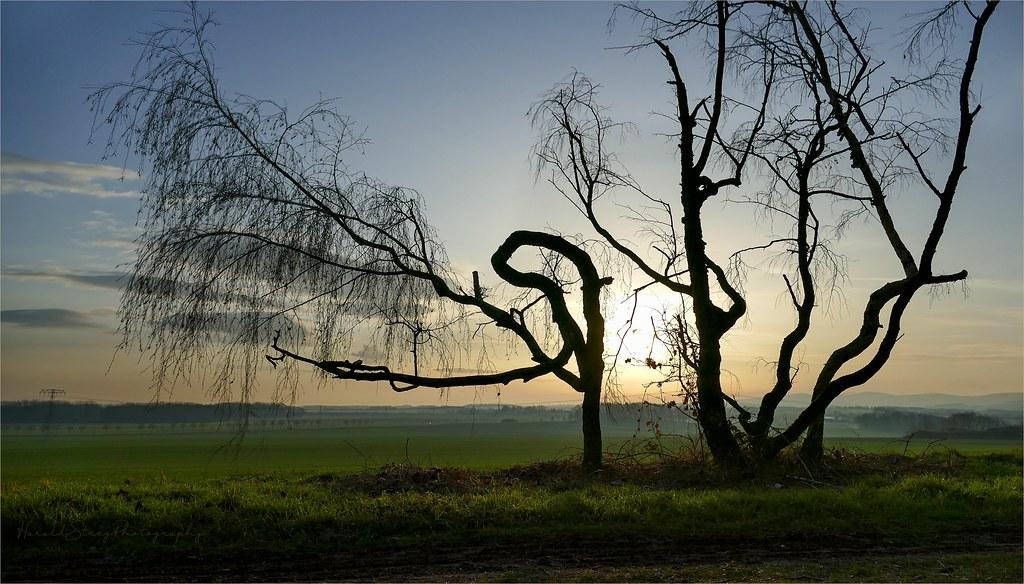 Sex In Der Natur Vor Der Untergehenden Sonne