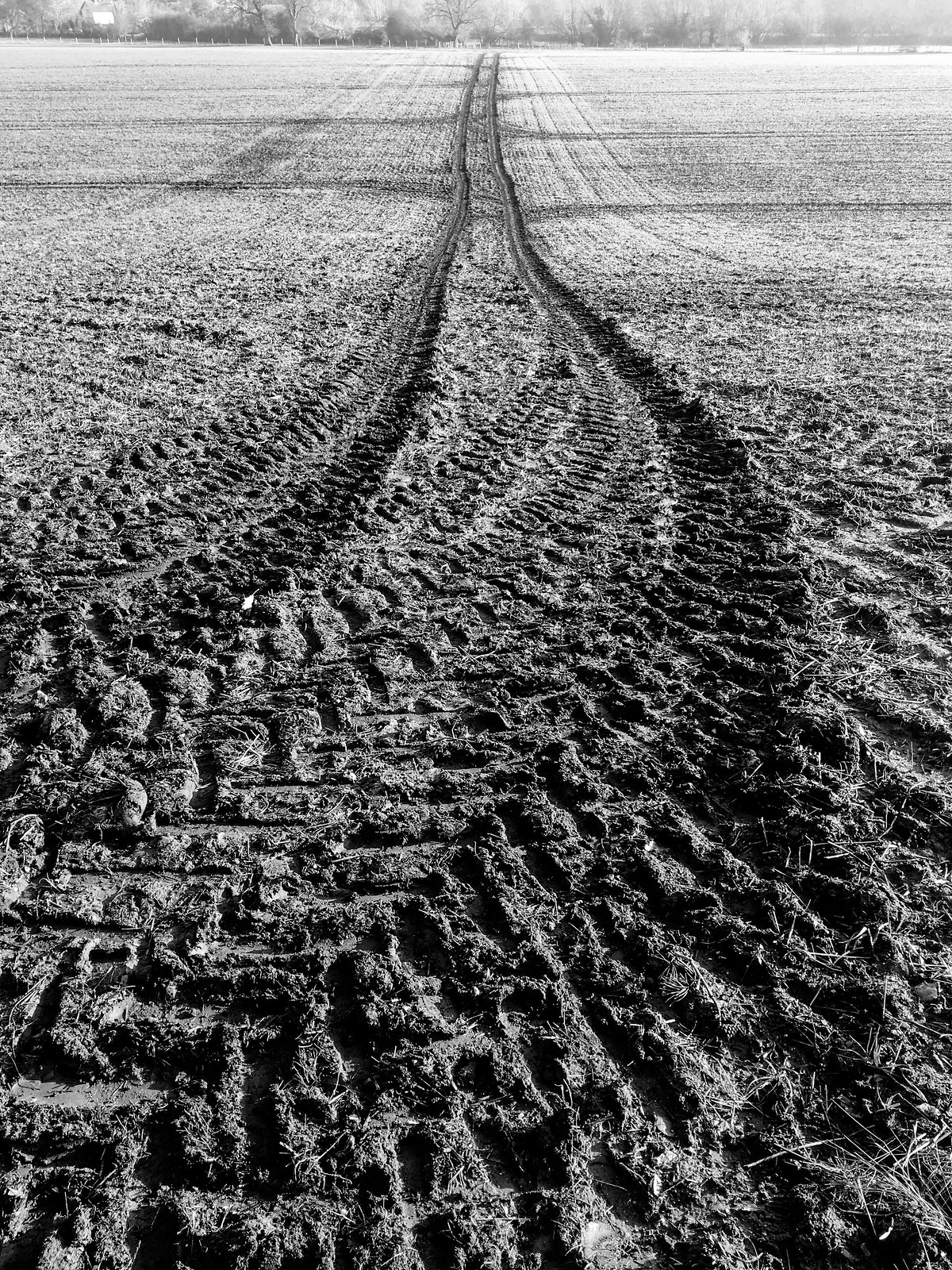 Field, mud, tracks