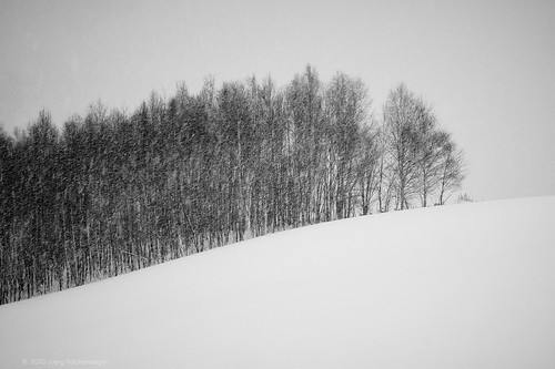 japan hokkaido takushinkan biei blackwhite landscape tree snow snowing winter blackandwhite sony sonyalpha