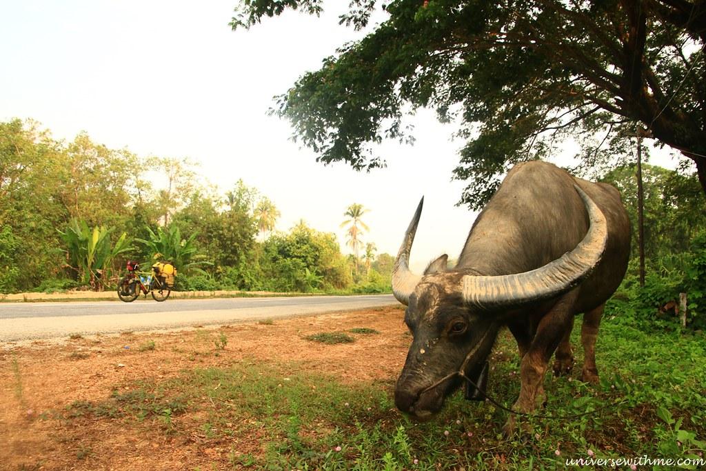 Myanmar Travel_089