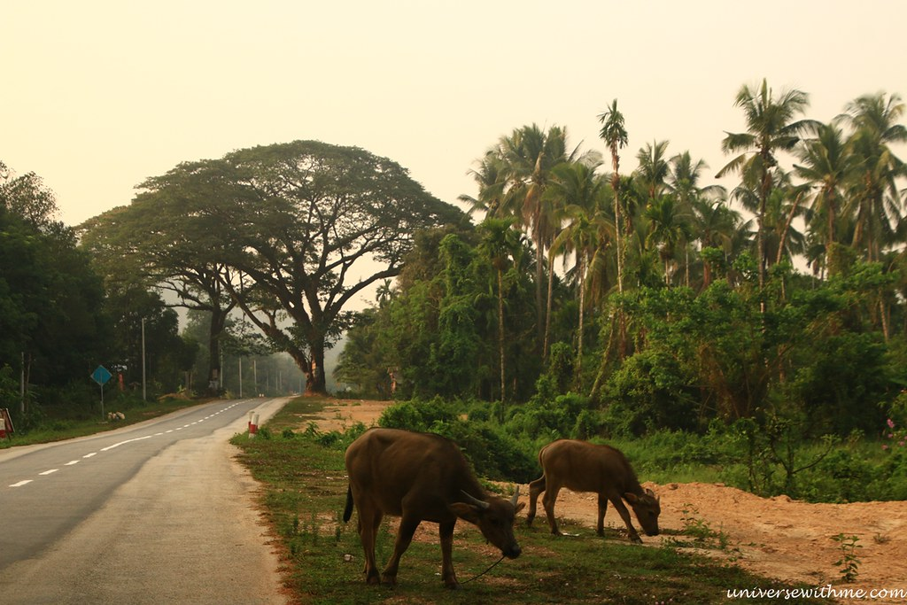 Myanmar Travel_087
