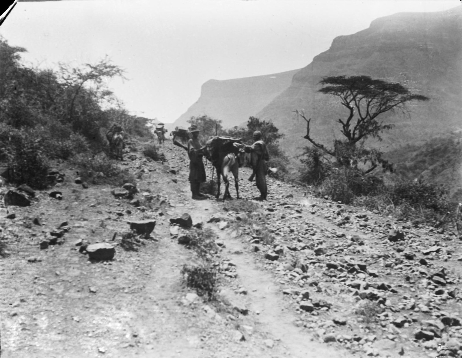 211. Перегрузка мула в дороге