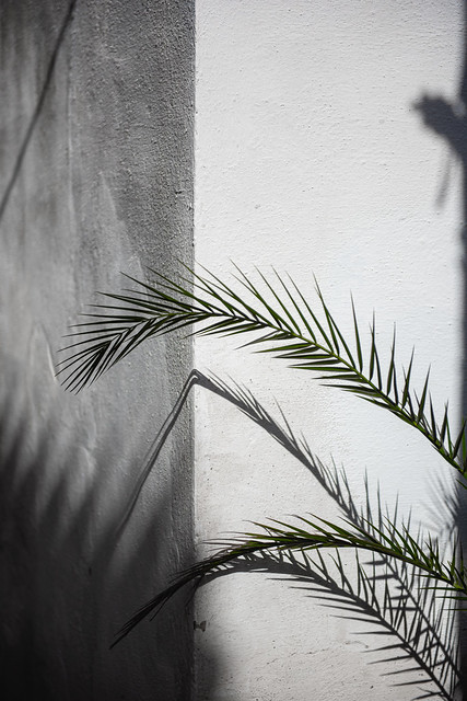 Fronds in Sunlight