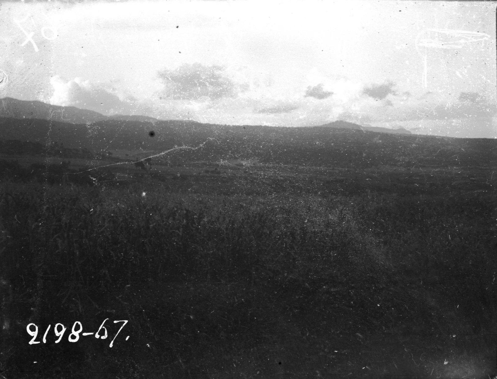 1967. Поле, засеянное кукурузой