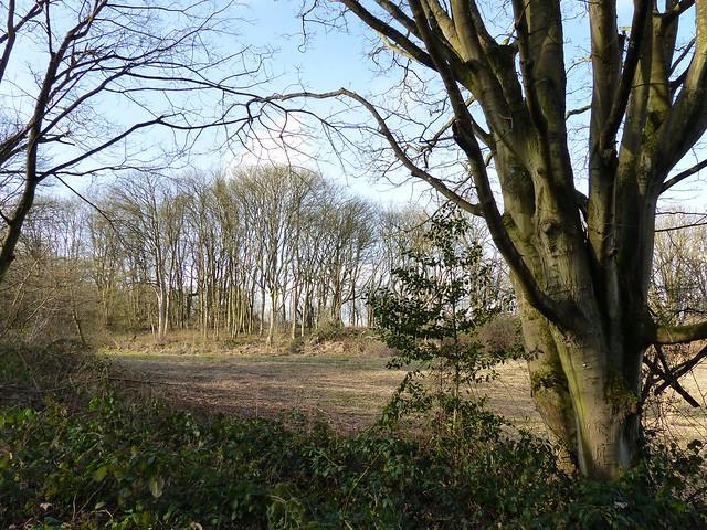 Wytham Woods Oxford UK.