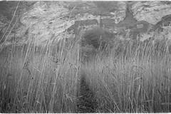 Grasses, Blast Beach, Seaham