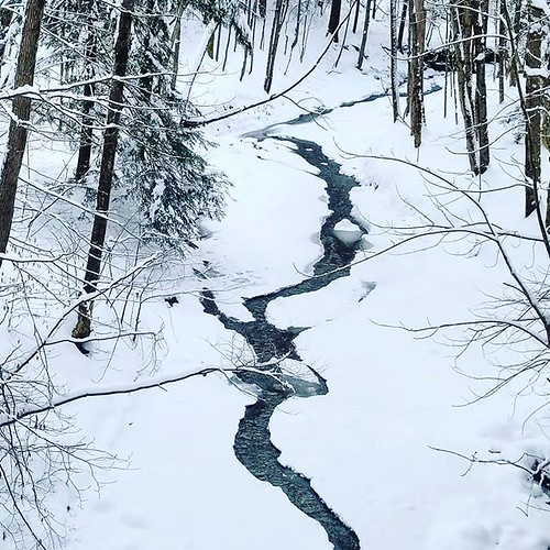 Stream, not quite frozen #ChestnutRidge #wny #orchardpark #winter #nature #hiking #trees #stream #runningwater #snow
