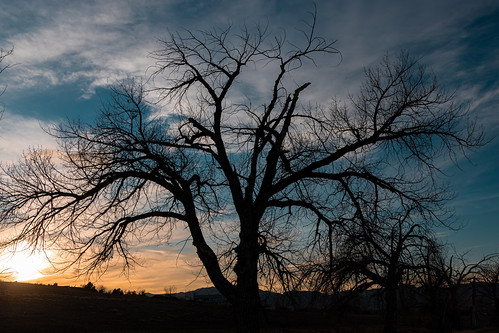 canonrp denver rp winter canon mirrorless trees january silhouette tree sky sunset colorado canoneosrp cottonwood usa outdoors standleylake 2020 arvada unitedstatesofamerica