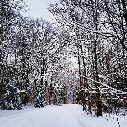 Farther down the snowy road #ChestnutRidge #wny #orchardpark #winter #nature #hiking #trees #snow