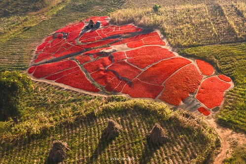 kadunastate nigeria westafrica zaria aerialphotography chili farming harvesting landscape village documentary
