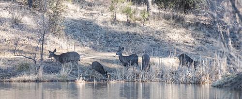 deer-20200208-103