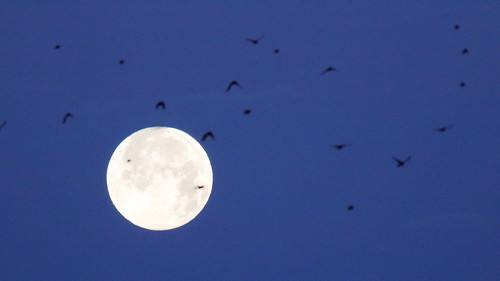 Full Snow Moon and birds 02-20200209