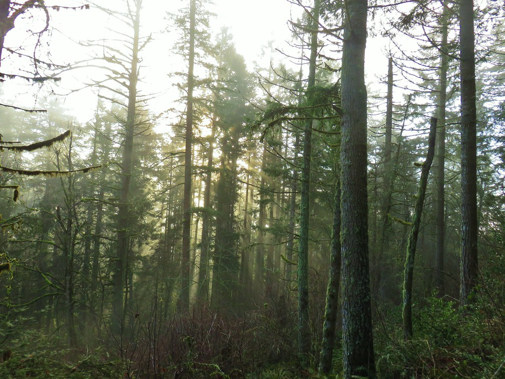 Fog in the forest at Spencer Butte