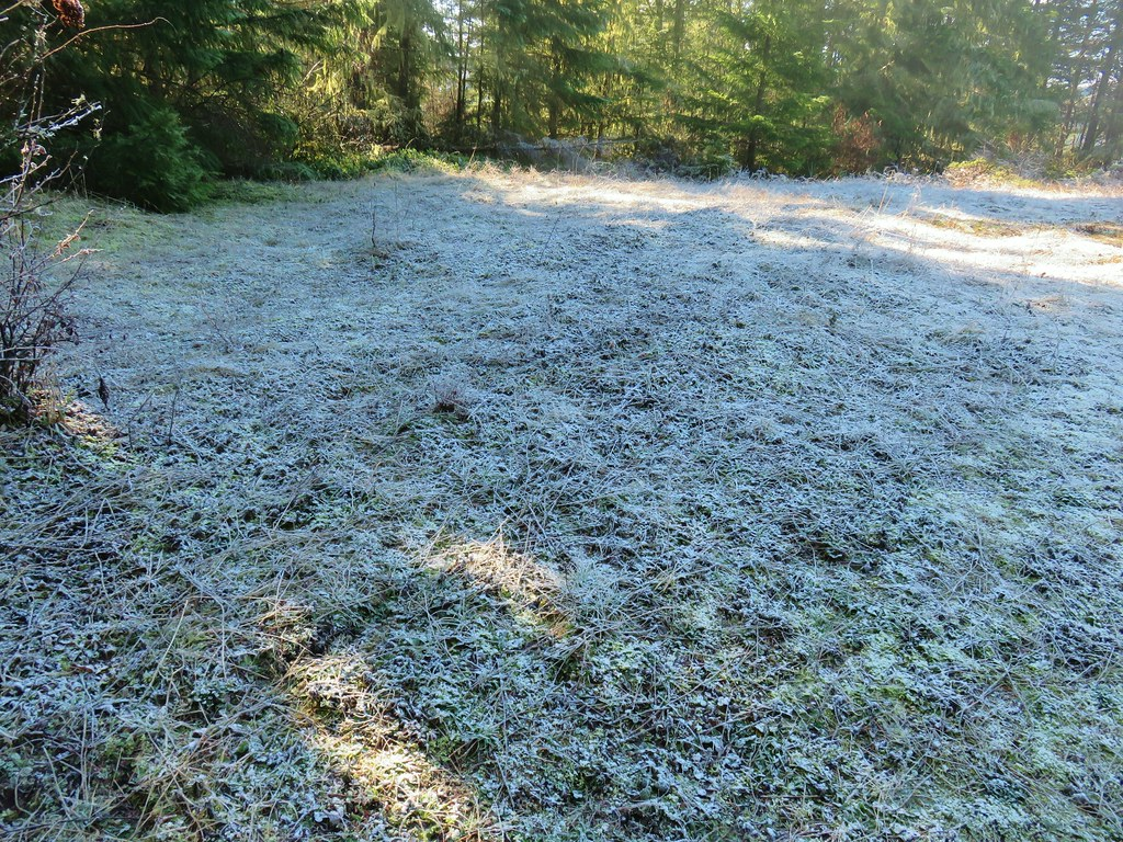 Frosty meadow