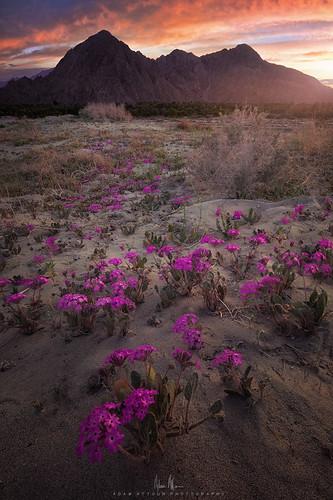 adamattounphotography indianwells california sunset