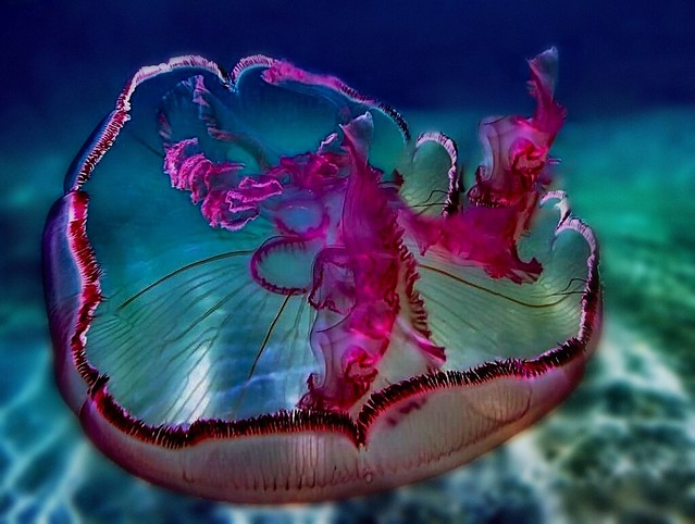 Facts about Jellies