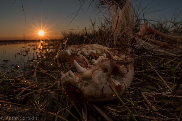 Sunset on Skunk Remains