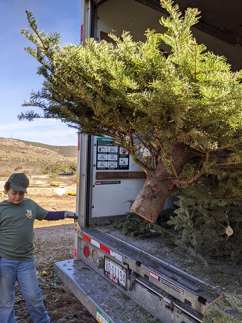 2020-01-04 Christmas tree recycling fundraiser