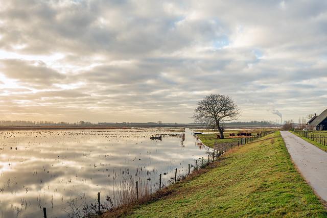 Flooded Dutch polder