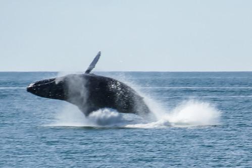 bayofbanderas fz1000 mexico panasoniclumixdmcfz1000 puertovallarta whale playacamarones