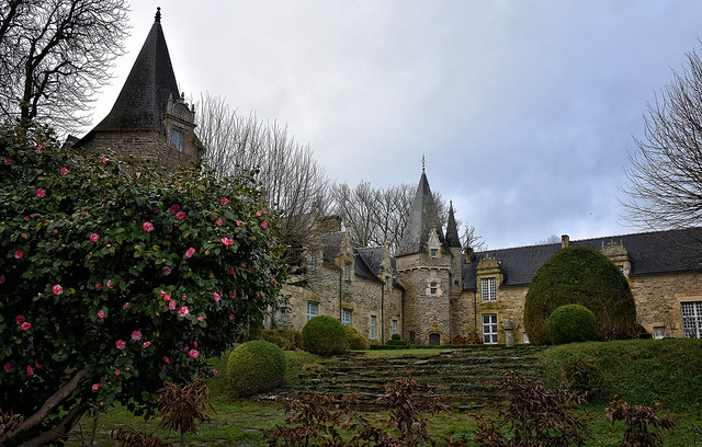 Le Camélia du Vrai Faux Chateau de Rochefort en Terre