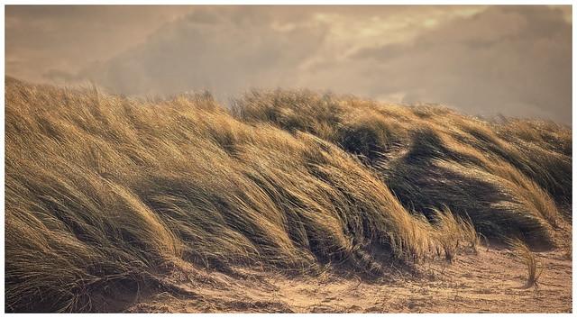 Dunes of Ameland