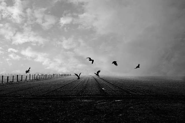 """""""On the wings of Time, sadness flies away. """""""