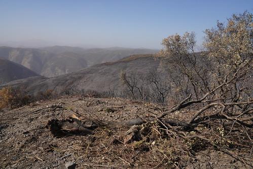 Briceberg Fire 2019