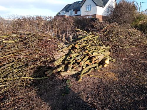 logs and sticks Feb 20