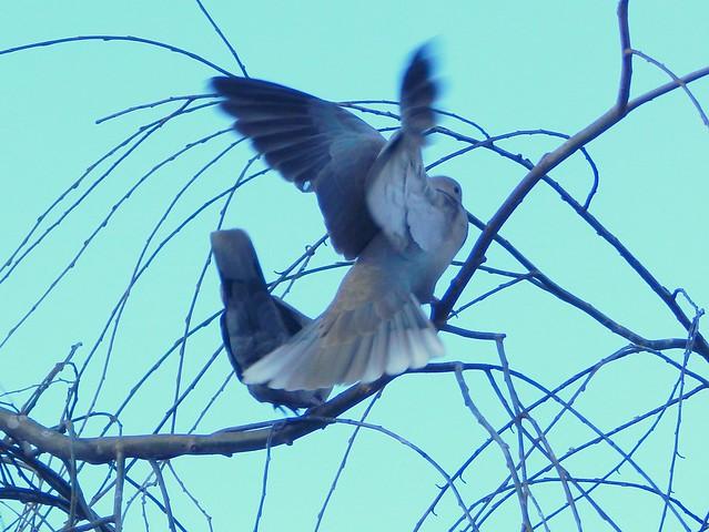 Landing in Winter Willow
