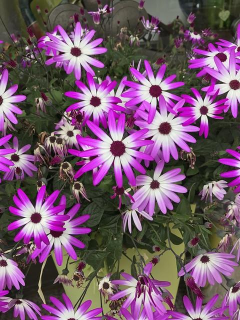 Blooming Flowers in Germany