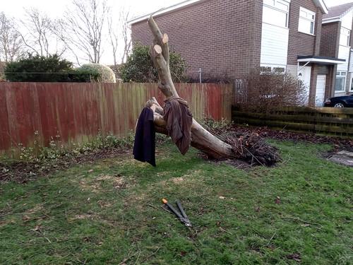 fallen tree Feb 20 (3)
