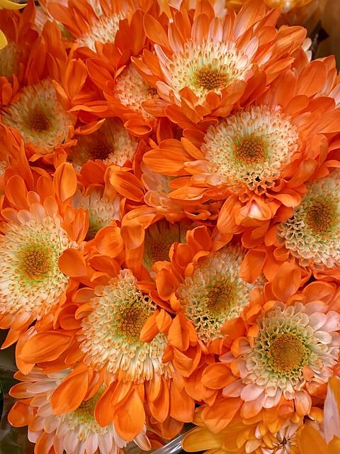Eye catching Orange Chrysanthemums
