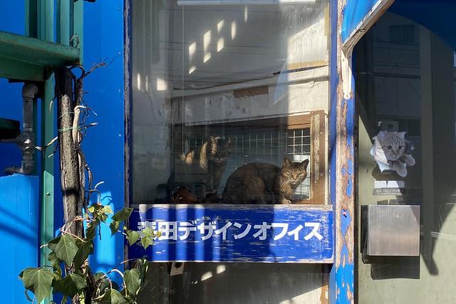 Today's Cat@2020-02-11