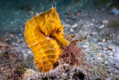 The Tiny Seahorse