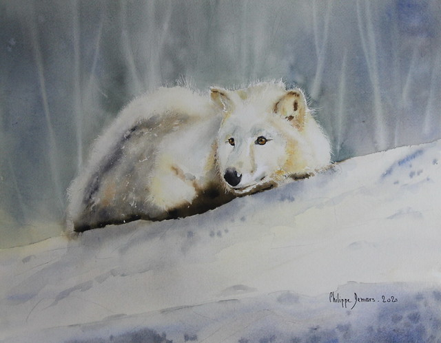 Petit renard polaire