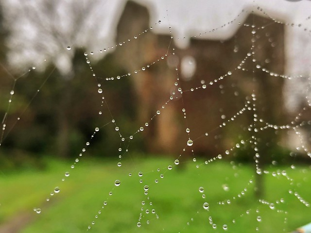 Turruxón de Trubia difuminado tras una tela de araña (Concejo de Gijón)