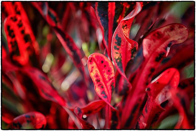 Red Flora