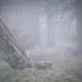 Foggy Days (3)
