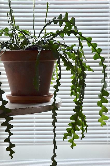 fishbone ><((('> cactus