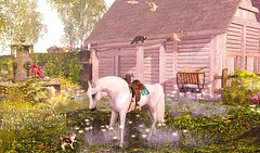 ~Buttercups Farm~